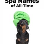 Funny spa names