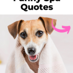 Fun spa quotes